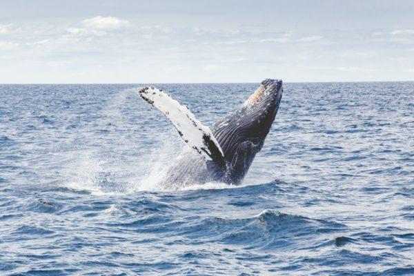 Whale Watching in Kalpitiya, Sri Lanka